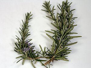 Herbal News/ Events. Rosemary